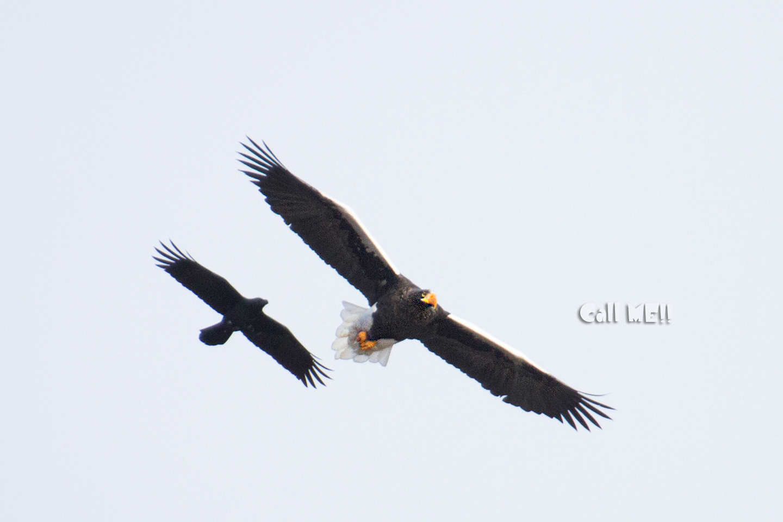 eagle1202.jpg