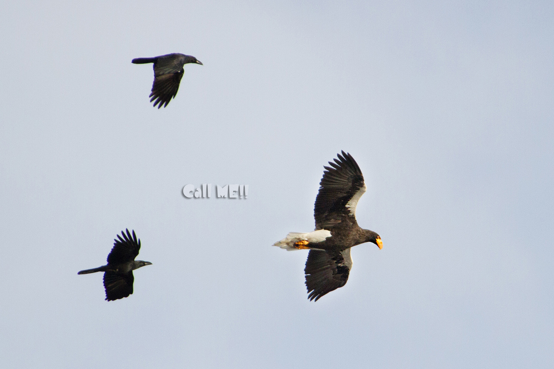 eagle1203.jpg
