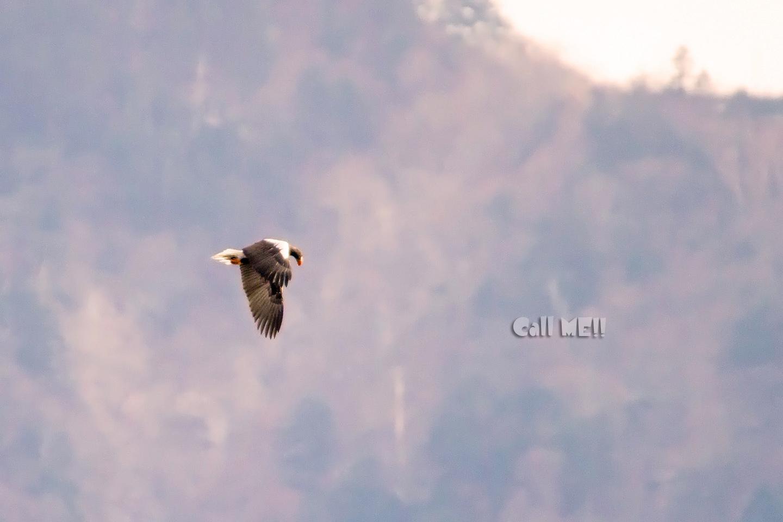 eagle1205.jpg
