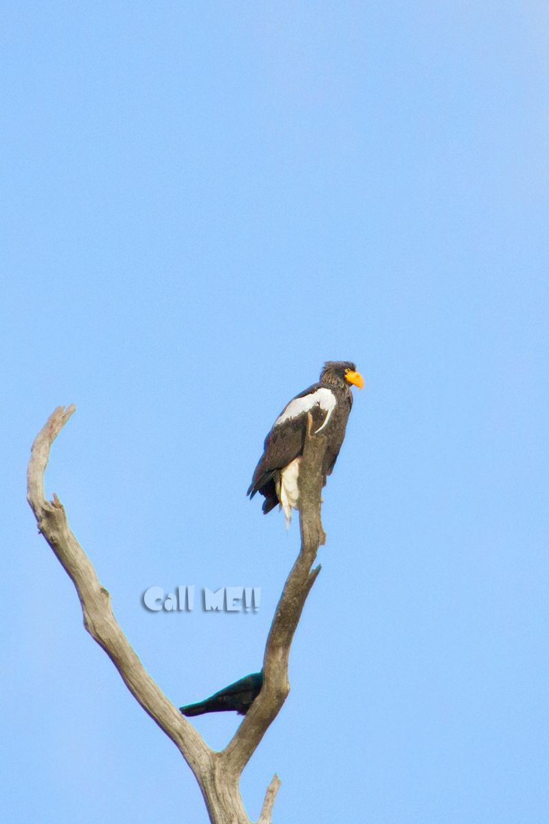 eagle1207.jpg