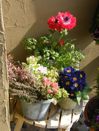 門扉前の花