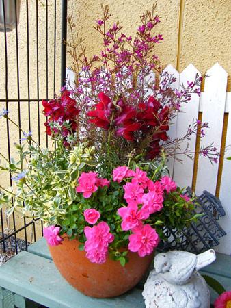 赤とピンクの寄せ植え