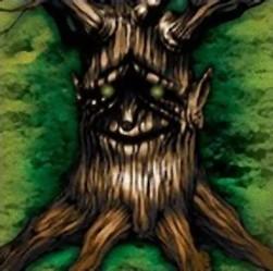 悟りの老樹