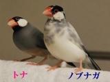 ノブちゃんはトナちゃんと仲良し!
