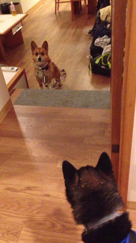 キッチンに入らないルーク