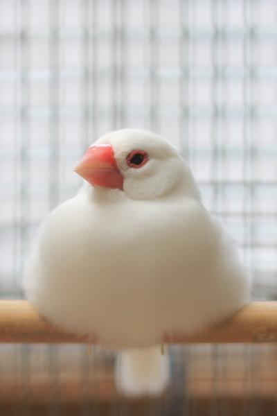 oshougatu mikannwonosete bunnchoukazari (3)