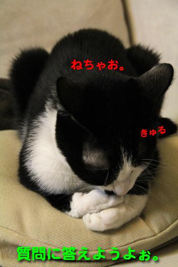 IMG_0044_Rねちゃお。きゅる