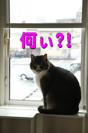 IMG_0404_R何ぃ?!ブン窓際