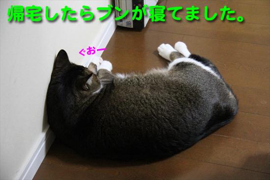 IMG_0043_R帰宅したらブンが寝てました。