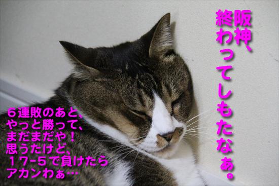 IMG_0034_R阪神、終わってしもたなぁ。