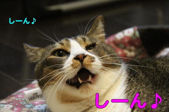 IMG_0753_Rしーん♪