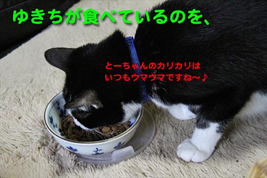 IMG_0137_Rゆきちが食べているのを、