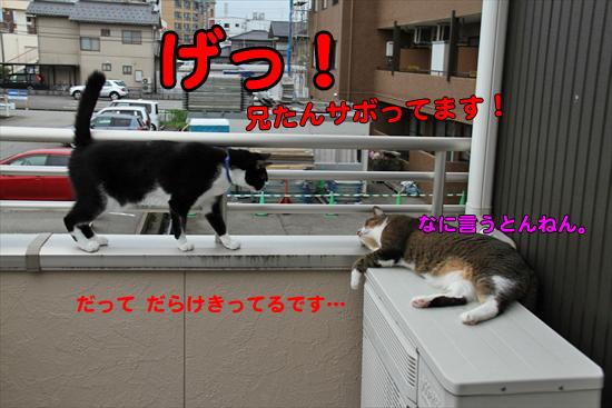 IMG_0083_R兄たんサボってます!