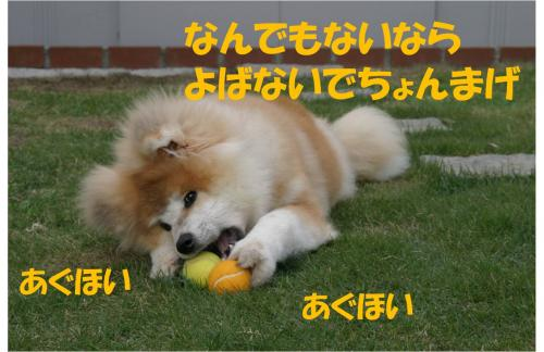 120115-5_convert_20120115130126.jpg