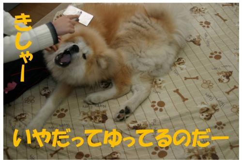 120212-4_convert_20120212222038.jpg