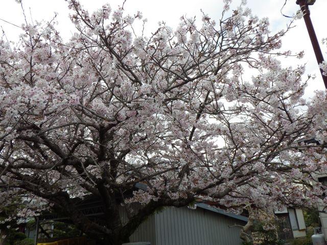 2013_03_31_hikkoshi07