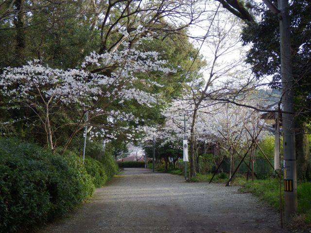 2013_03_23_KUAAINA06