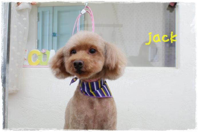 jack 小野