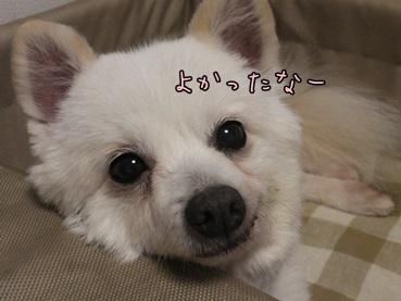 azuki140201_n.jpg