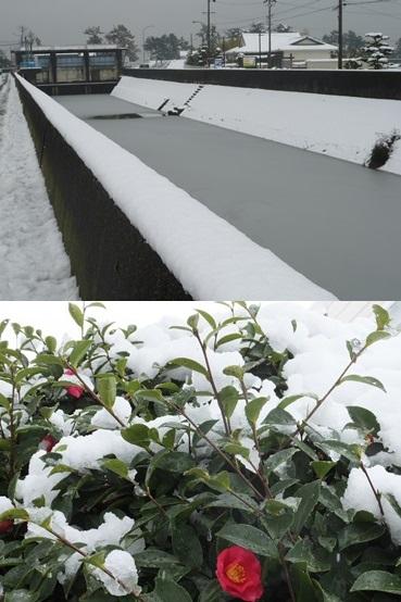 snow140214-vert.jpg
