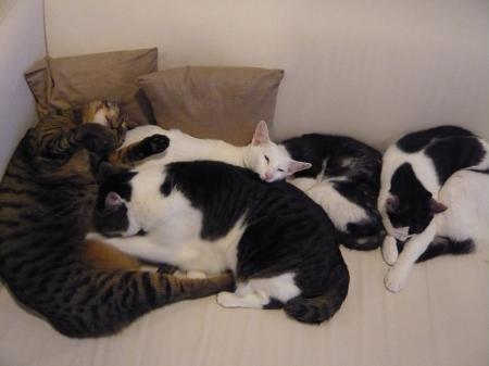 ラーとモアニとマナとオラとレア