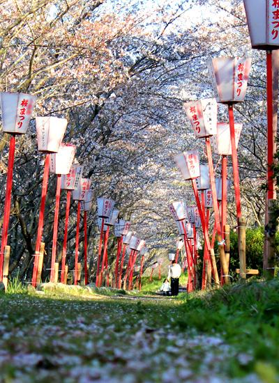 2012桜02