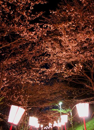 2012桜03