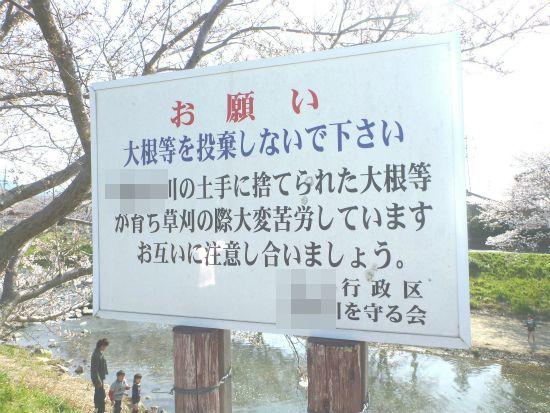 2012.04.01桜5