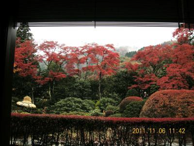 満開の紅葉~日光逍遥園