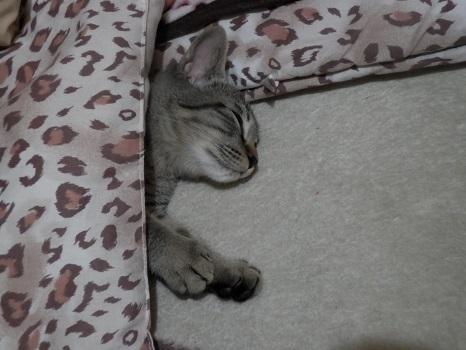 寝る陸斗3