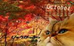 2011年カレンダーぽんちw4