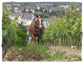 20080605-091 Saumur城0003-1