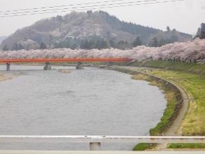 2012doteakura.jpg