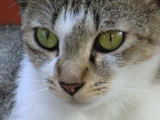 銀杏のような瞳