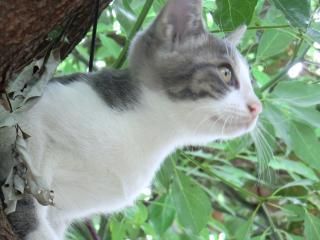 木登りアップ