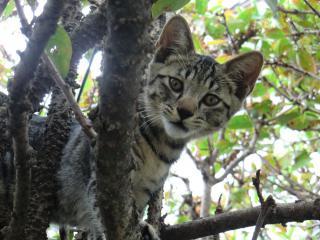 しま木登り