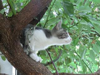 ぐっちゃん木登り