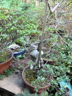 植木鉢登り