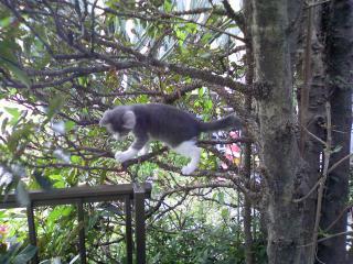木登りグレ