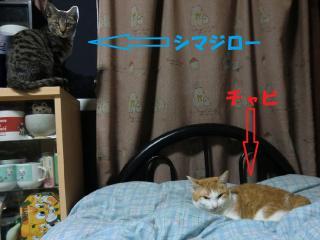 a3_20120411111127.jpg