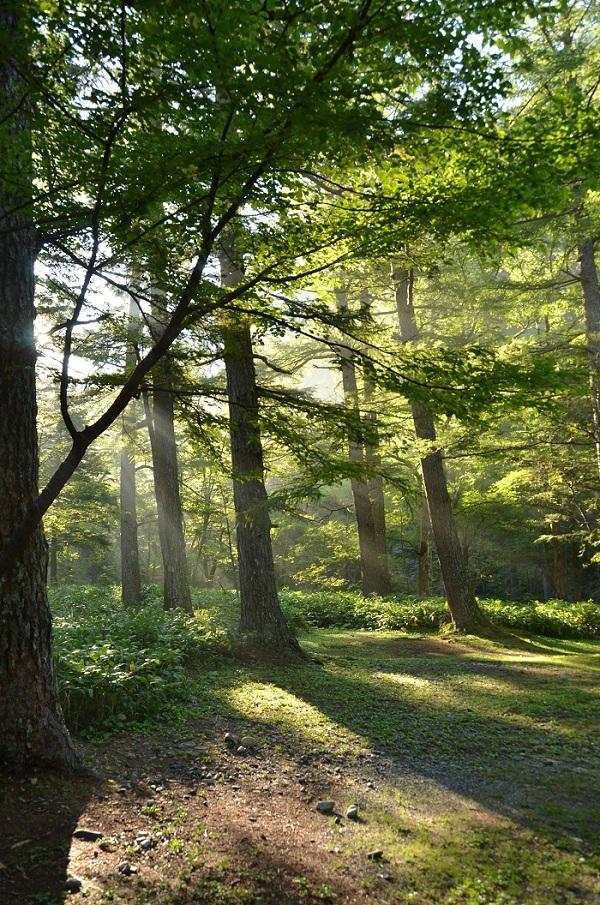 DSC_0017朝の森