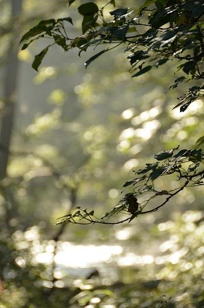 DSC_0023 水辺の葉