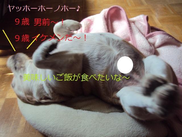 DSC05694_2014091216191083e.jpg