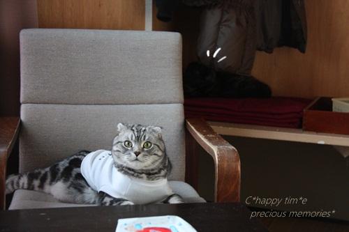 ソファー猫