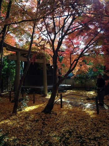 rengeji3.jpg