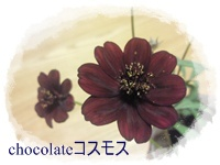 NEC_2940.jpg