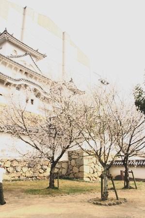 20130326 姫路城5