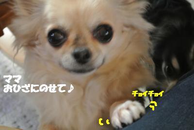20130128+005_convert_20130128103636.jpg