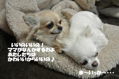 20130212+027_convert_20130212155435.jpg