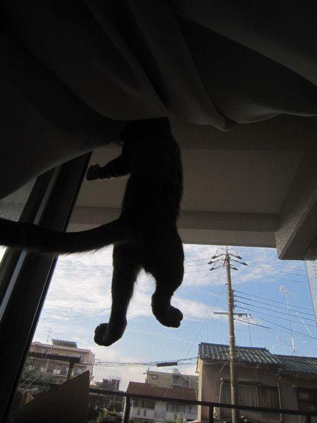 ナナちゃんは網戸登りを覚えた